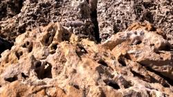 Coral Rock 4