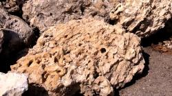 Coral Rock 5