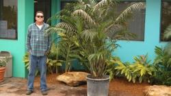 Cat Palm
